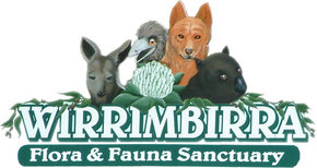 Wirrimbirra Sanctuary - Palm Beach Accommodation