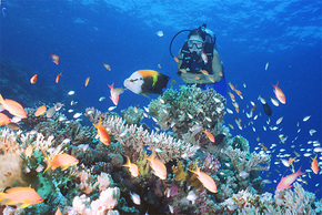 Drop Zone Dive Site - Palm Beach Accommodation