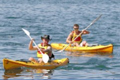 Manly Kayaks - Palm Beach Accommodation