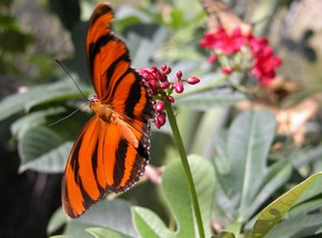 Butterfly Farm - Palm Beach Accommodation