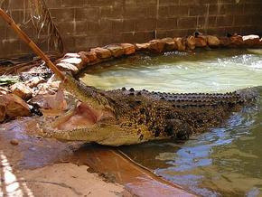 Wyndham Zoological Gardens and Crocodile Park - Palm Beach Accommodation