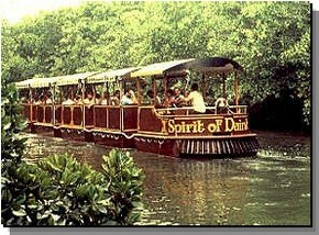 Daintree Rainforest River Trains - Palm Beach Accommodation