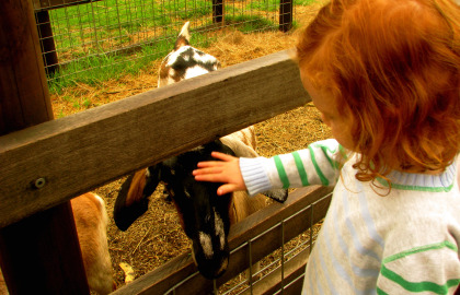 Collingwood Children's Farm - Palm Beach Accommodation