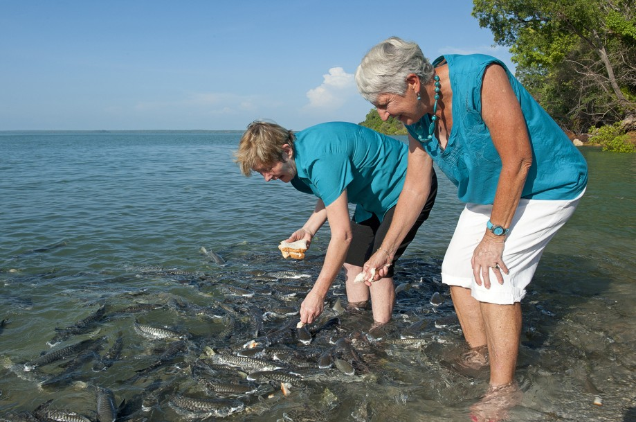 Aquascene Fish Feeding Sanctuary - Palm Beach Accommodation