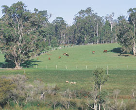 Scenic Drives - Bunbury Collie Donnybrook - Palm Beach Accommodation