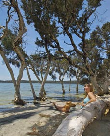 Stokes National Park - Palm Beach Accommodation