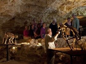 Naracoorte Caves National Park - Palm Beach Accommodation