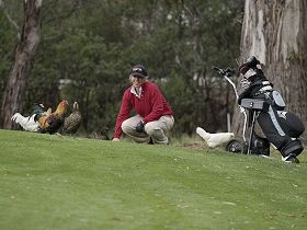 Tasmania Golf Club - The - Palm Beach Accommodation
