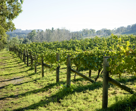 Surveyor's Hill Vineyards - Palm Beach Accommodation