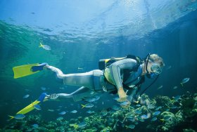 Kirra Reef Dive Site - Palm Beach Accommodation