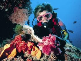 Cook Island Dive Site - Palm Beach Accommodation
