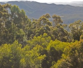 Conondale National Park - Palm Beach Accommodation