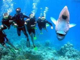 Gotham City Dive Site - Palm Beach Accommodation