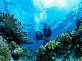 Coral Gardens Dive Site - Palm Beach Accommodation