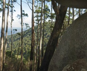 Gulaga National Park - Palm Beach Accommodation