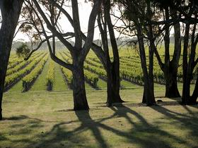 Henry's Drive Vignerons - Palm Beach Accommodation