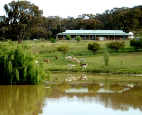 Clearview Alpacas - Palm Beach Accommodation
