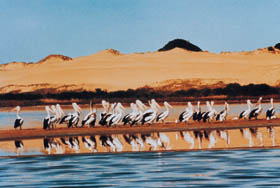 Coorong National Park - Palm Beach Accommodation