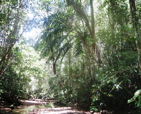 Mount Lewis National Park - Palm Beach Accommodation