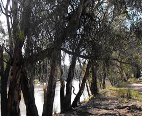 Mia Forest Drives Narrandera - Palm Beach Accommodation