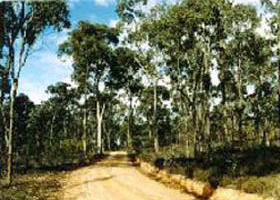 Paddys Ranges State Park - Palm Beach Accommodation
