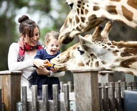 Taronga Western Plains Zoo Dubbo - Palm Beach Accommodation