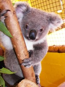Cooberrie Park Wildlife Sanctuary - Palm Beach Accommodation