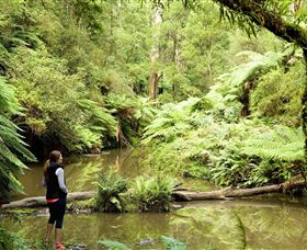 Morwell National Park - Palm Beach Accommodation