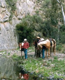 Yarramba Horse Riding - Palm Beach Accommodation