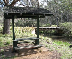 Barrington Tops State Forest - Palm Beach Accommodation