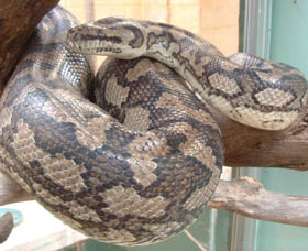 Armadale Reptile Centre - Palm Beach Accommodation