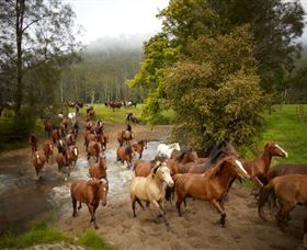 Glenworth Valley Horse Riding - Palm Beach Accommodation