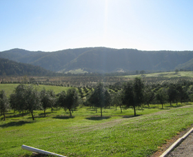 Hastings Valley Olives - Palm Beach Accommodation