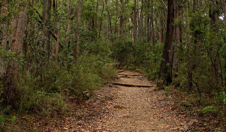 Pigeon House Mountain Didthul walking track - Palm Beach Accommodation