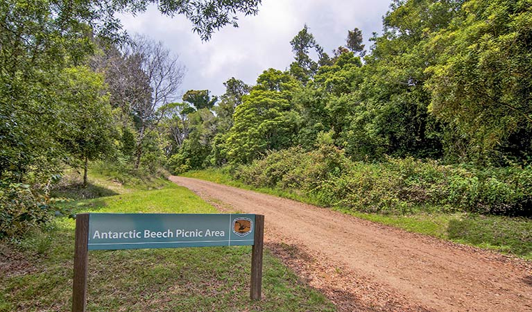 Antarctic Beech picnic area - Palm Beach Accommodation