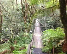 Bemm River Scenic Reserve - Palm Beach Accommodation