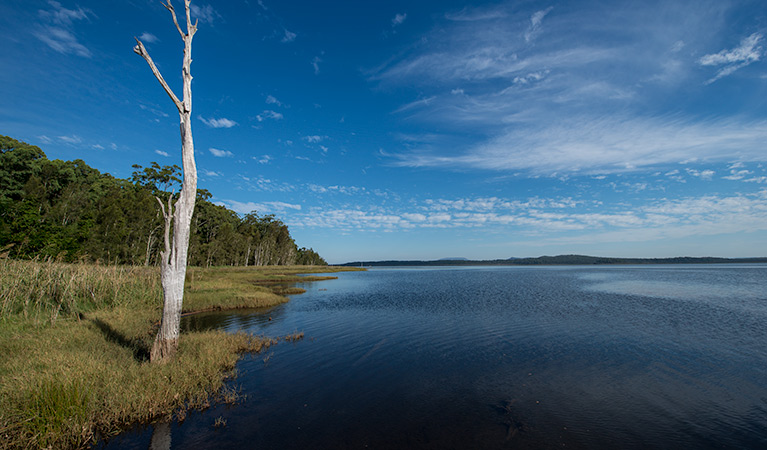 Lake Innes Nature Reserve - Palm Beach Accommodation