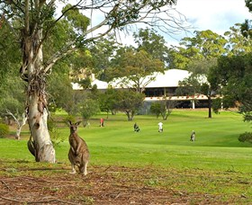 Pambula Merimbula Golf Club - Palm Beach Accommodation