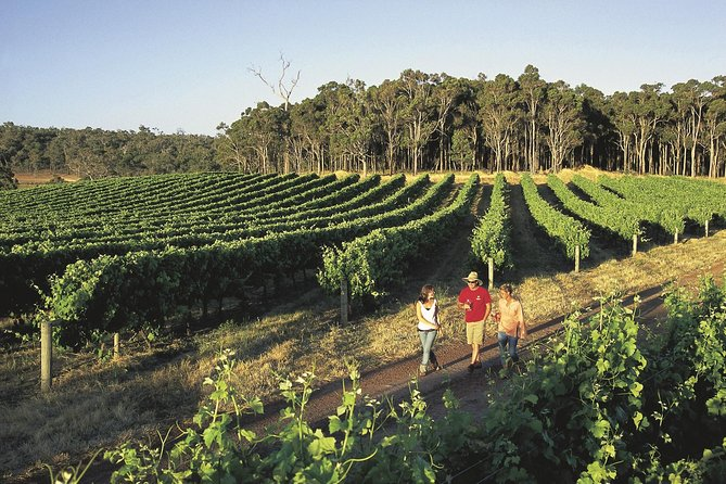 Margaret River Caves Wine and Cape Leeuwin Lighthouse Tour from Perth - Palm Beach Accommodation