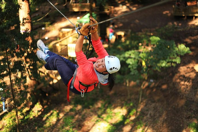 Trees Adventure Lane Poole Park - Treetop  Zipline Experience - Palm Beach Accommodation