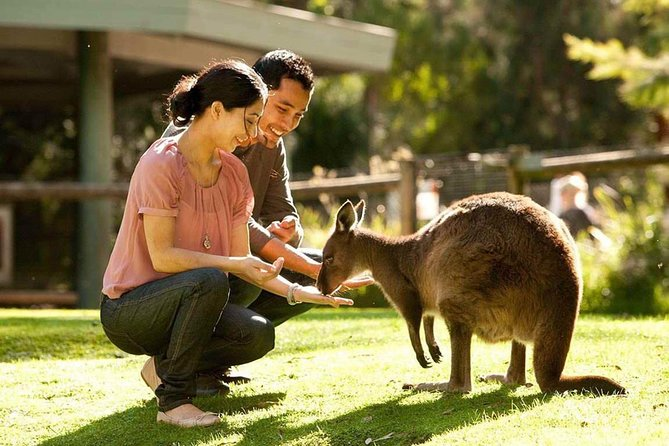 Very Best of Perth Tour - Wildlife Park  City Highlights Tour - Palm Beach Accommodation