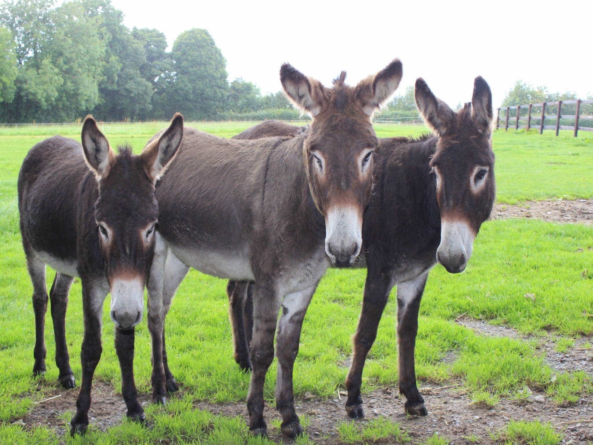 The Good Samaritan Donkey Sanctuary - Palm Beach Accommodation
