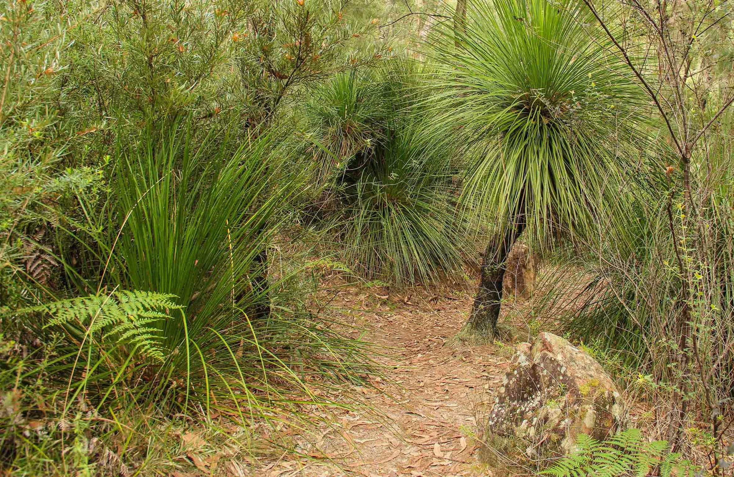 Grass Tree Circuit - Palm Beach Accommodation
