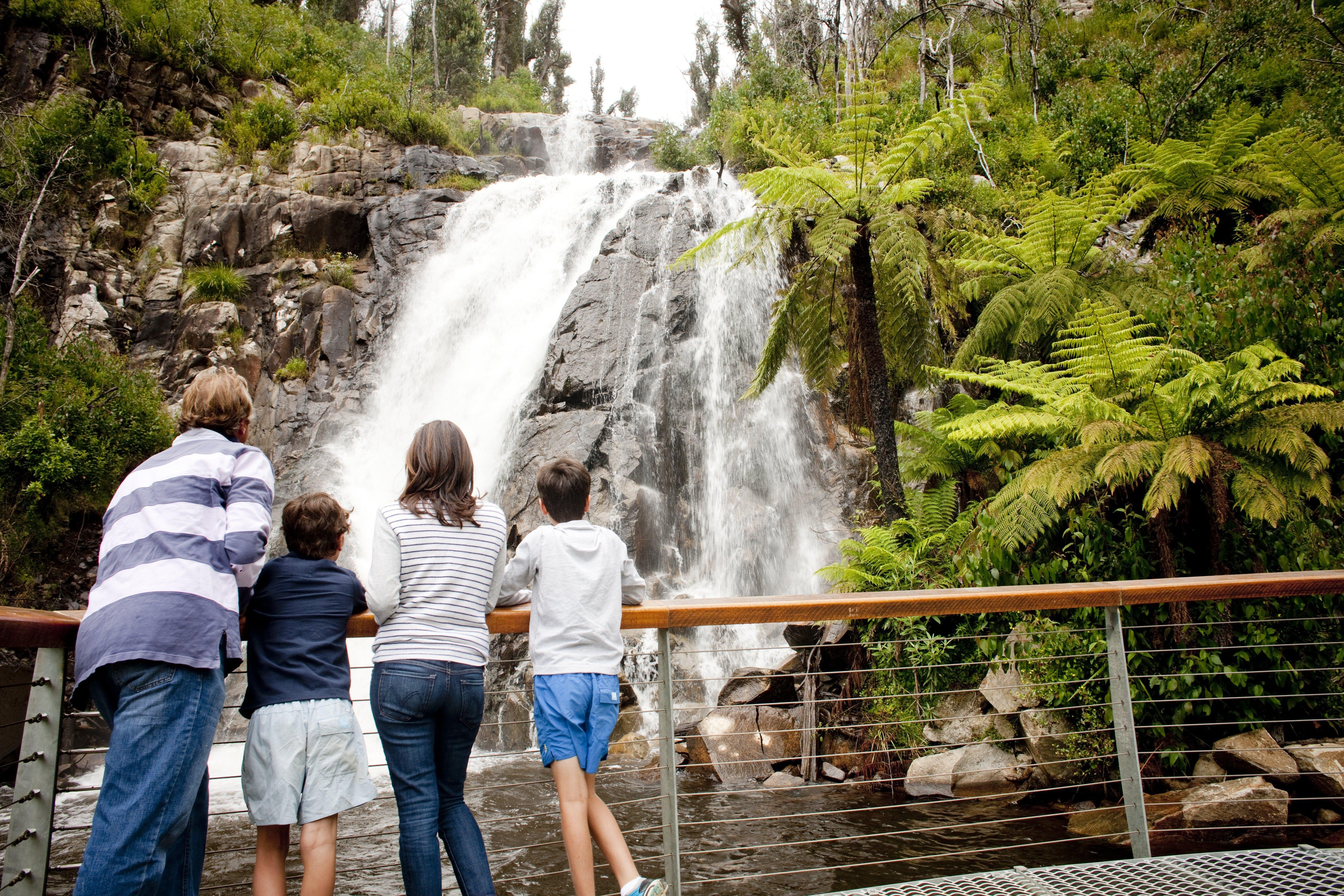 Steavenson Falls - Palm Beach Accommodation