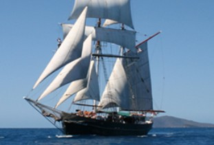Australian Tallship Cruises - Palm Beach Accommodation