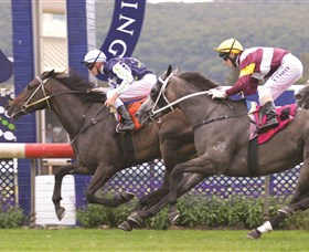 Gosford Race Club - Palm Beach Accommodation