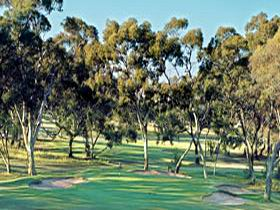 Tanunda Pines Golf Club - Palm Beach Accommodation