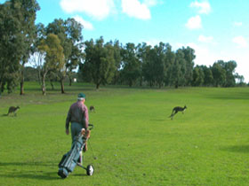 Coffin Bay Golf Club - Palm Beach Accommodation