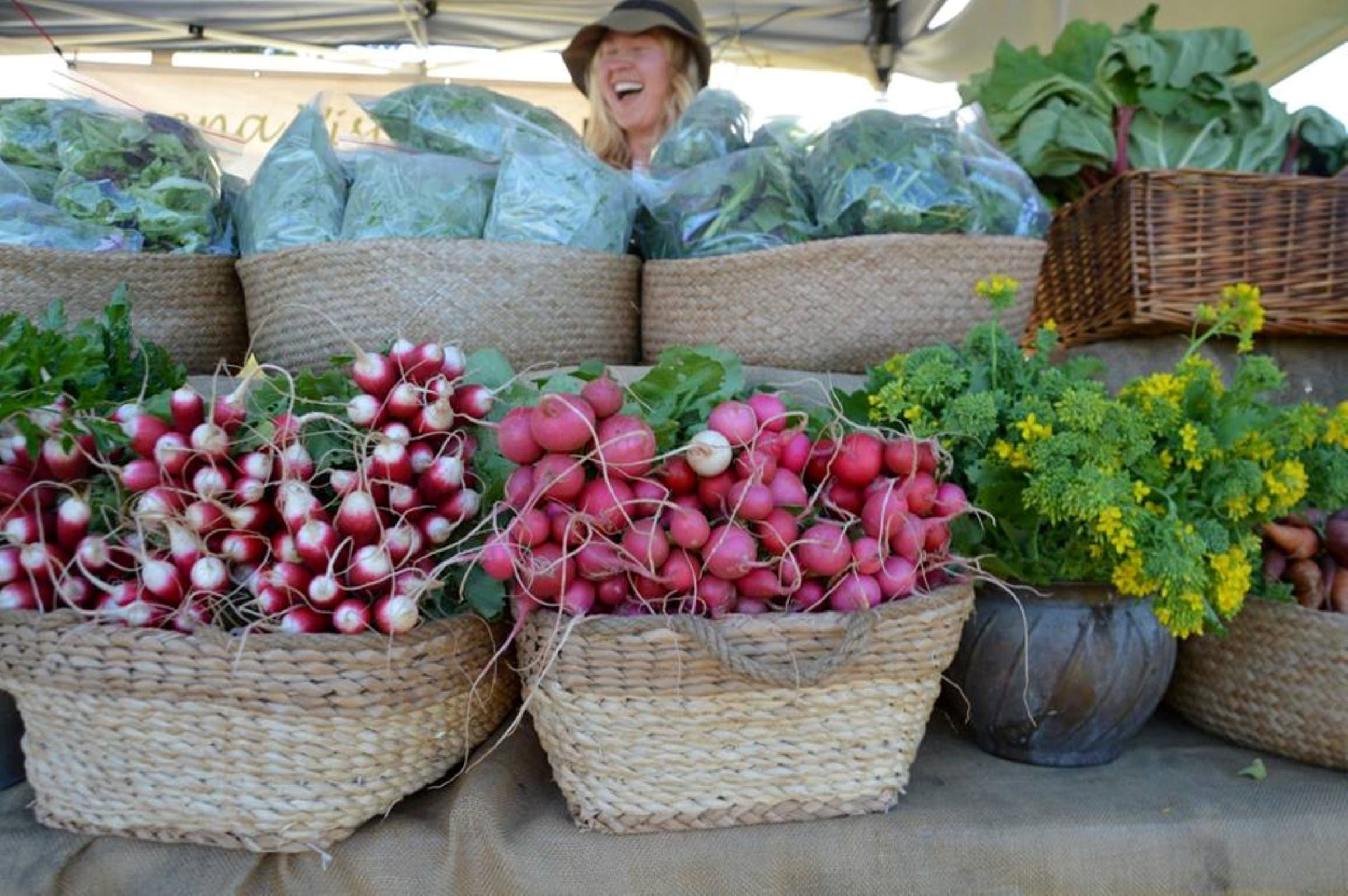 Berry Farmers' Market - Palm Beach Accommodation