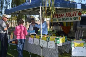 Corowa Rotary Federation Festival Market - Palm Beach Accommodation